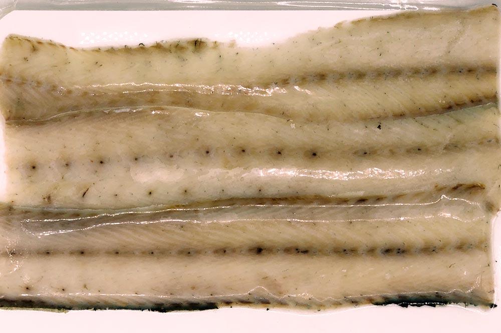 Marcopesca Import - Ahumados Anguila ahumada